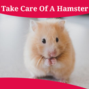 How To Take Care Of A Hamster APK