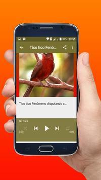Canto do Pássaro Tico Tico rei Novo Offline apk screenshot