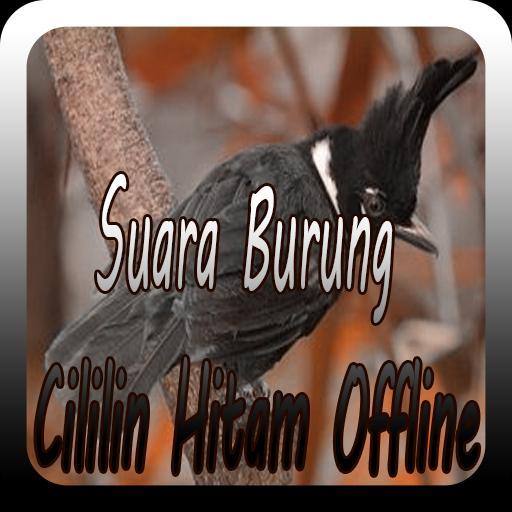 Suara Burung Cililin Hitam Offline For Android Apk Download