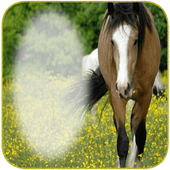 Horse Photo frames icon