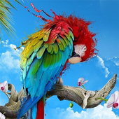 African Talking Parrot icon
