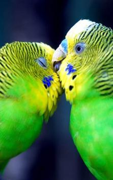 African Talking Parrot screenshot 3