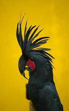 African Talking Parrot screenshot 4