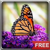 Flying Butterflies LWP icon