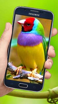 Flying Birds 3d Live wallpaper poster