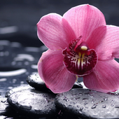 Orchid New Jigsaw Puzzles icon