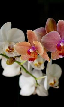 Orchid New Jigsaw Puzzles poster