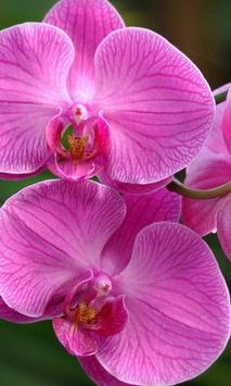 Orchid New Jigsaw Puzzles apk screenshot