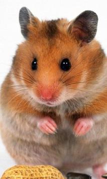 Funny Hamsters Jigsaw Puzzles poster