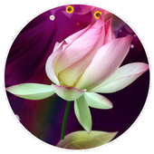 Lotus Live Wallpaper icon