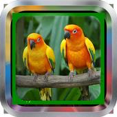 Master Lovebird|Kicau Mania icon