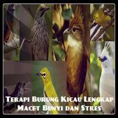 Terapi Burung Kicau Lengkap icon