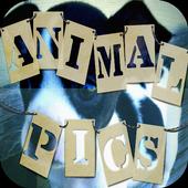 Animal Pics icon