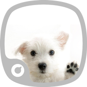 Cats And Dogs Theme icon