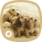 Lovely Dogs Theme icon