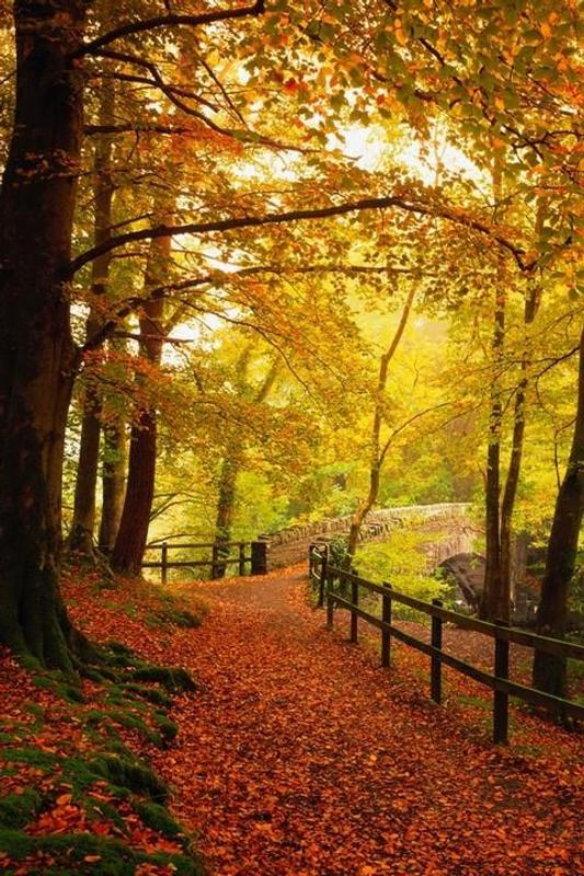 autumn live wallpapers for android apk download