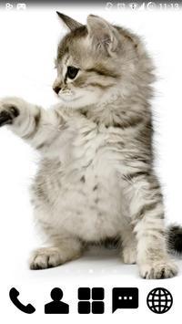 Little Kitty GO Launcher Theme screenshot 1