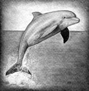 Learn How to Draw Ocean animals screenshot 1