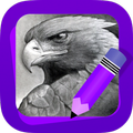 Learn How to Draw Eagles