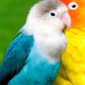 Parrots wallpaper icon