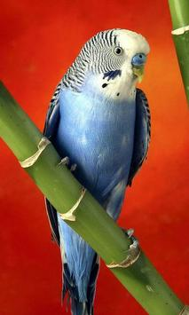 Parrots wallpaper poster