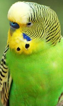 Parrots wallpaper apk screenshot