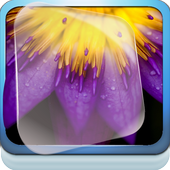 Metallic Purple Lotus Live WP icon