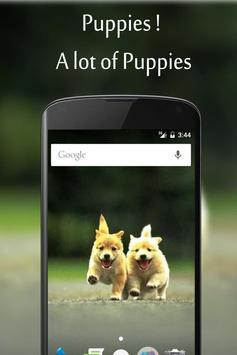 Auto Pup screenshot 1