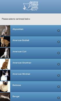 The Cat App poster