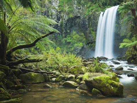 Jungle HD Wallpaper apk screenshot