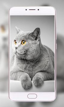 Pets Wallpapers - Dogs, Cats, Birds, Bunnies, poster