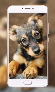 Pets Wallpapers - Dogs, Cats, Birds, Bunnies, screenshot 2