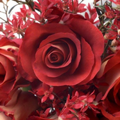 3D Roses wallpaper icon
