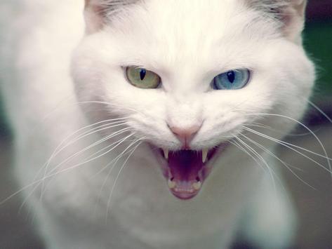 Cat Simulator screenshot 1