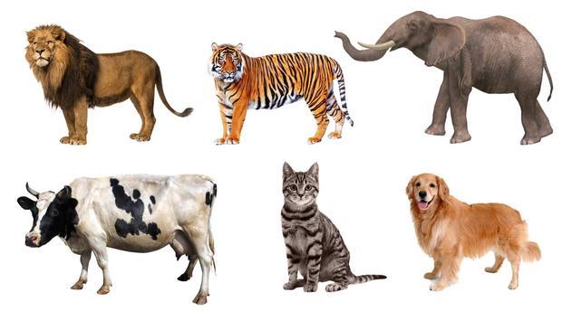 animals sounds apk screenshot