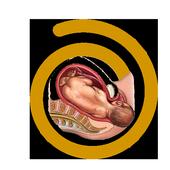 Embarazo y parto sin dolor icon