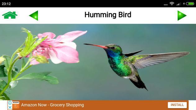 Animal and Bird Sound for Kids screenshot 4