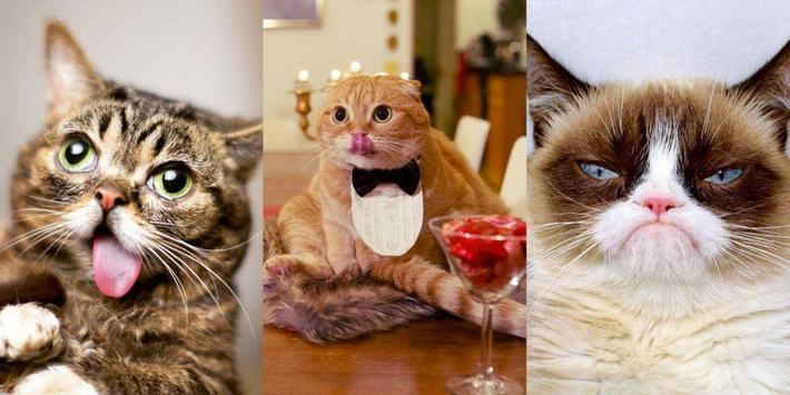 GIF CATS SWEETS - BACKGROUNDS screenshot 6