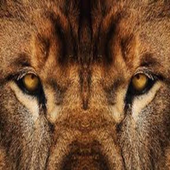 Lions Den Live Webcam and Chat Florence Alabama icon