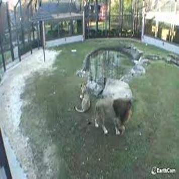 Lions Den Live Webcam and Chat Florence Alabama poster