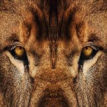 Lions Den Live Webcam and Chat Florence Alabama apk screenshot
