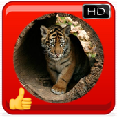 Tiger Photo Frame icon