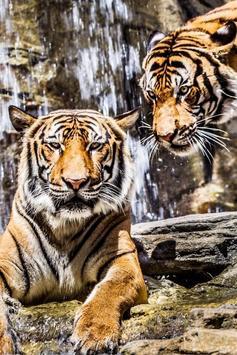 Tiger Wallpapers HD 2018 I 2019 screenshot 1