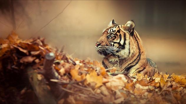 Tiger Wallpaper screenshot 7