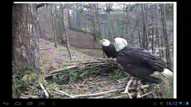Eagle Nest Cam poster