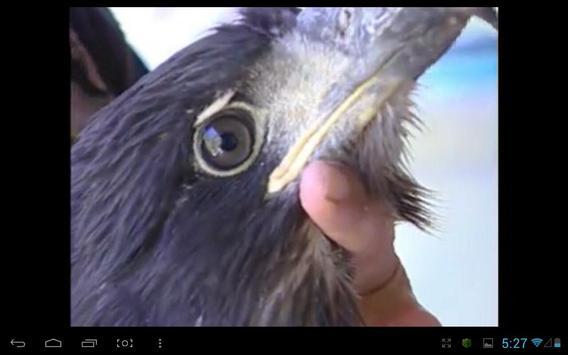 Eagle Nest Cam screenshot 1
