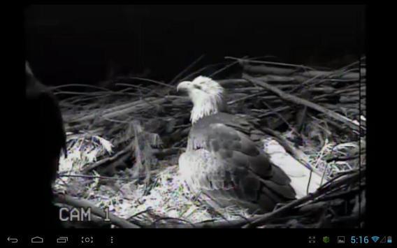 Eagle Nest Cam screenshot 2