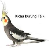 Kicau Kicau Burung Falk For Android Apk Download