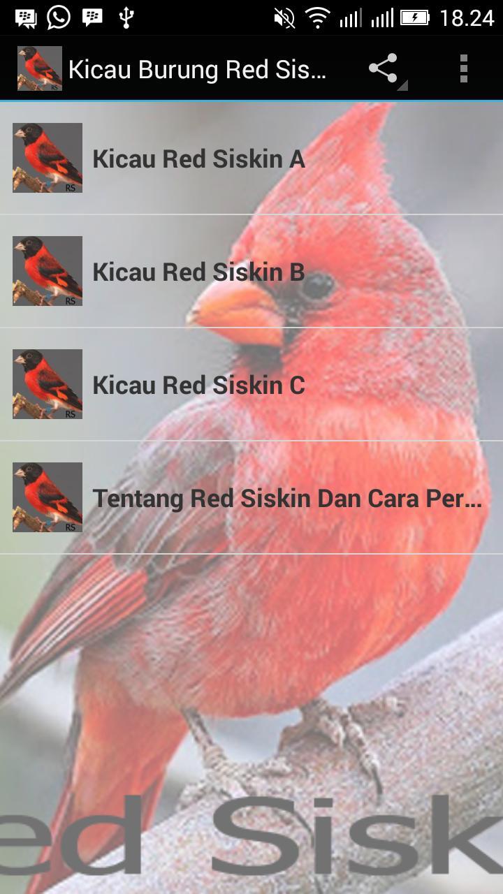 Audio Kicau Burung Red Siskin For Android Apk Download