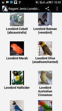 Ragam Jenis Lovebird Populer apk screenshot